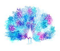 Beautiful Handdrawn Peacock bird consist many details. Stock Illustration