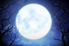 Moonlight in night with branches Stock Photos