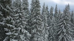 Aerial view winter tree mountains Carpathians Stock Footage