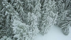 Aerial view winter fir mountains Carpathians Stock Footage