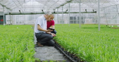 4K Workers in agriculture and science industry checking young plants with tablet Stock Footage