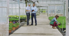 4K Businessmen in large plant nursery greenhouse shake hands on a deal. Stock Footage