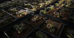 4K Rows of young seedlings in trays in large commercial greenhouse Stock Footage