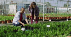 4K Attractive couple looking at plants in large commercial plant nursery Stock Footage