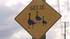 Road sign warning of geese crossing Stock Footage