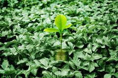 Be a different fresh money plant growing in dry plants, Money growth concept Kuvituskuvat