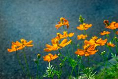 Yellow and orage flowers in the green park Stock Photos