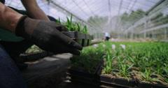 4K Workers planting seedlings in large nursery greenhouse Stock Footage