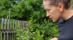 Harvesting. Young woman picking and eats cherry berries Stock Footage