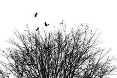 The crows with autumn tree, black and white, environment concept Stock Photos