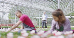 4K Workers in the agricultural industry checking the plants in a large nursery Stock Footage
