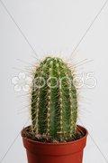 Cactus in crock Stock Photos