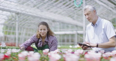 4K Team of workers in the agricultural industry at work in a large plant nursery Stock Footage