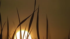 Silhouette of the rising sun through the grass Stock Footage