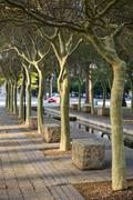 Tree lined pathway through a park Stock Photos