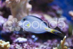 Marine aquarium fish tank Stock Photos
