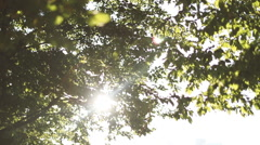 Sun shining through leaves Stock Footage