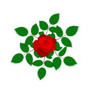 Rose flower isolated on white background. Stock Illustration