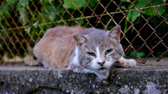 Slow motion of a street cat on a fence Stock Footage