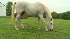 Horse on farm eating grass Stock Footage