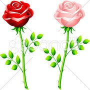 Realistic red and pink rose on a stem Stock Illustration