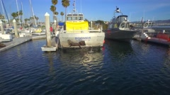 Sea lions climb onto the back of a boat Stock Footage