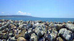 Drone view of pelicans on rocks by ocean and blue sky Stock Footage