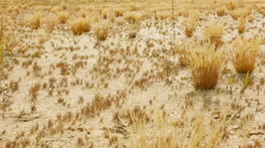 Sandy Desert. Beautiful tranquil Landscape of Sandy Steppe Stock Footage