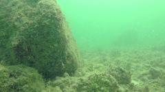 Reef fish Fl Keys Four Stock Footage