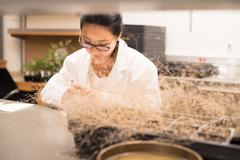 Scientist in the plant growth chamber Stock Photos
