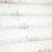 DNA sequencing results Stock Photos