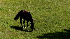 Horse Grazing in the Meadow and Chews the Grass in Slow Motion. Stock Footage