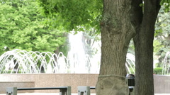 City fountain in the park. Green tree in the park. Plants in the park on the Stock Footage
