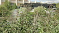 The lake shore in the city with vegetation and reeds Stock Footage