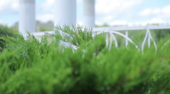 Beautiful green bushes near the gazebo on the shore of the pond. Green areas in Stock Footage