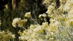 Dried flowers heads in the wind Stock Footage