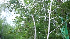 Kids playing with tree branches Stock Footage