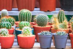 Various cactus plants in garden Stock Photos