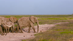HERD OF ELEPHANTS WALKING AMBOSELI KENYA AFRICA Stock Footage
