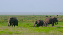 HERD OF ELEPHANTS IN SWAMP AMBOSELI KENYA AFRICA Stock Footage