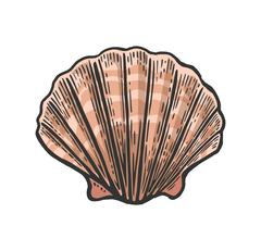 Sea shell Scallop. Color engraving vintage illustration. Isolated on white ba Stock Illustration