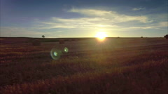 Beautiful aerial drone harvested field rural horizon sunset summer landscape Stock Footage