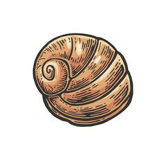 Sea shell nautilus. Color engraving vintage illustration. Isolated on white b Stock Illustration