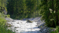 Green forest mountain stream fresh clean water nature beautiful scenery creek Stock Footage
