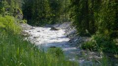 Beautiful nature Austrian Alps fast running brook green forest mountain stream Stock Footage