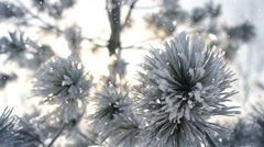 Winter frost on spruce tree and snowfall close-up 4k UHD (3840x2160) Stock Footage