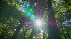Green beautiful forest low angle dolly motion sunlight flash gleaming long stems Stock Footage