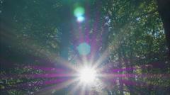 Pristine deep forest radiating sunbeams colorful sun rays sunburst energy trees Stock Footage