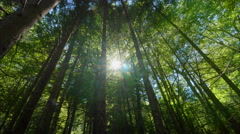 Deep green forest low angle dolly motion sunlight flash Stock Footage