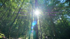 Green beautiful forest dolly low angle trees sunlight sunbeams sun shining woods Stock Footage